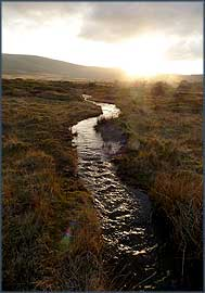 Stream running off the Preseli Hills over Brynberian Common